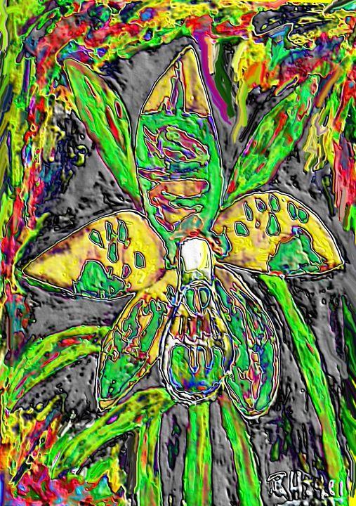 Rare orchid nr17 - Rene art