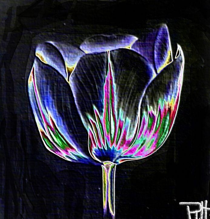 The black tulip - Rene art