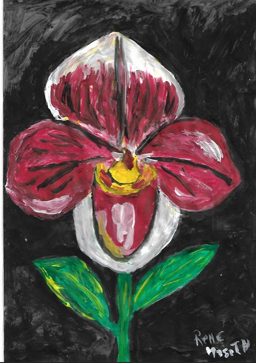 south american orchid - Rene art