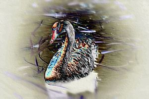 Black swan digital art