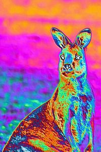 Digital art kangaroo