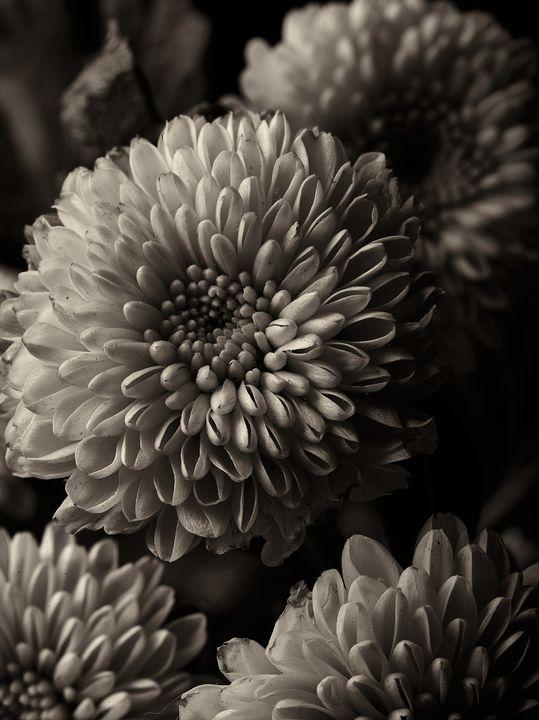 like a flower 09 - 7773535