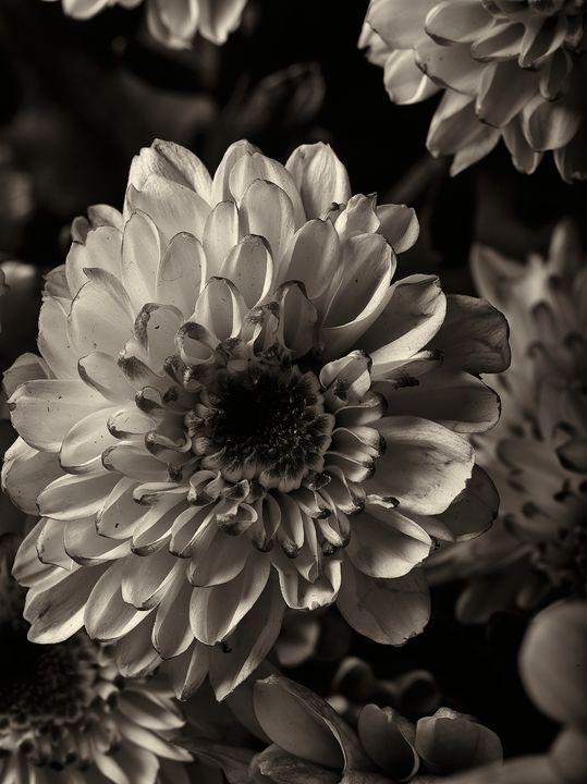 like a flower 08 - 7773535