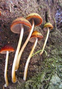 Feminine Fungi