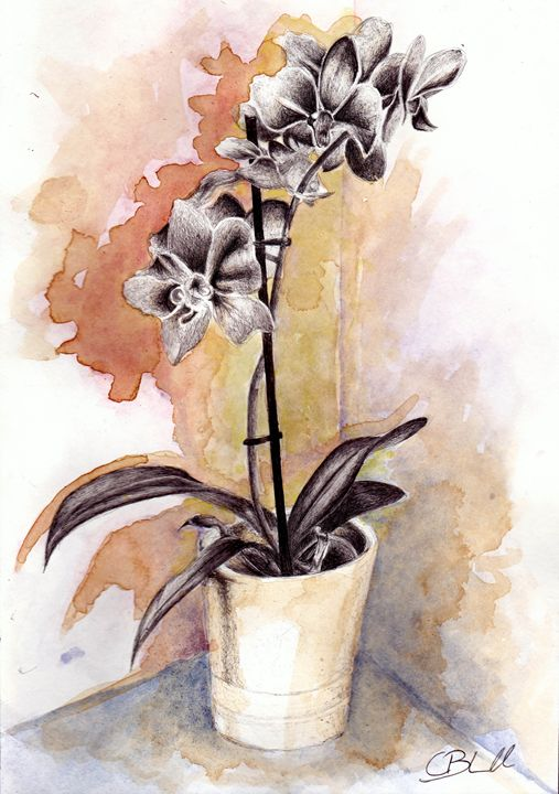 Orchids in pen and coffee - Chloë Blackwell