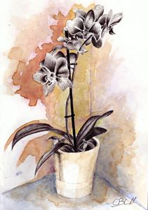 Orchids in pen and coffee