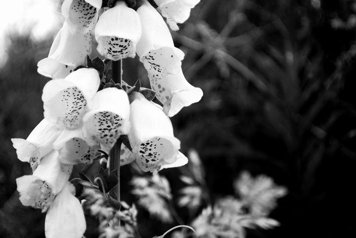 Black and White - Chloë Blackwell