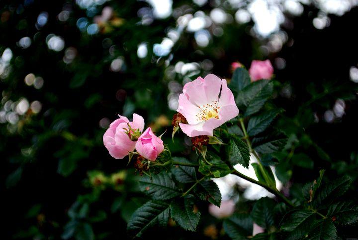 Bright Pink - Chloë Blackwell