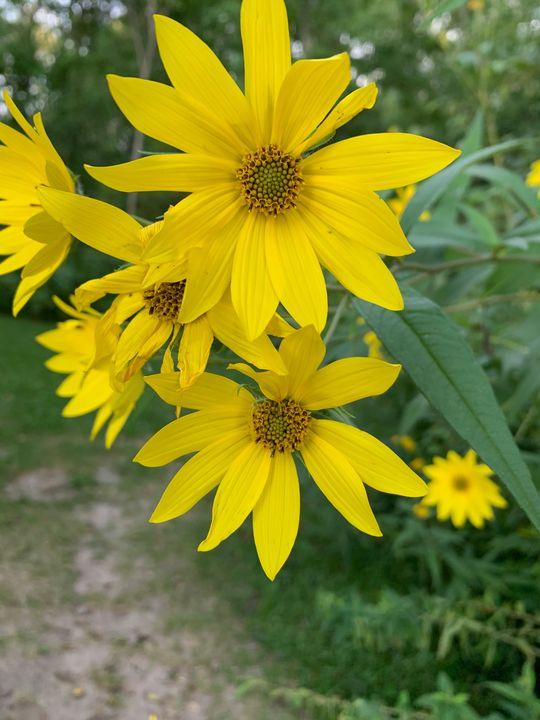 Yellow Petals - Morgan's Photography