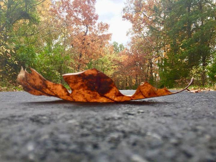 Fallen leaf - Crafty Crafting Katy
