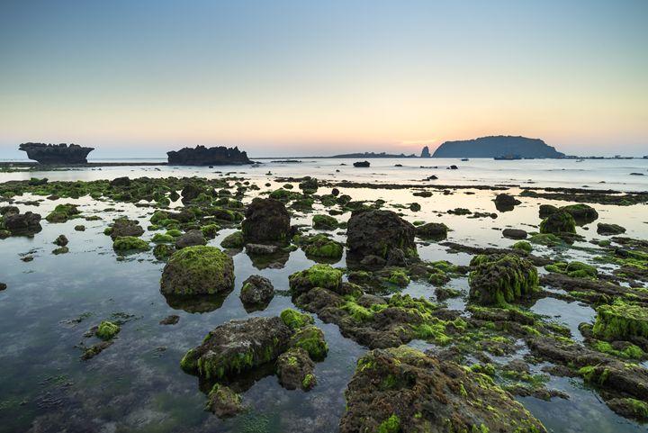 Mosses zone - Vietnam beauty landscape
