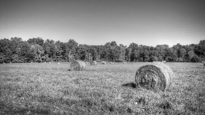 Days of Harvest - Colleen G. Drew Photography