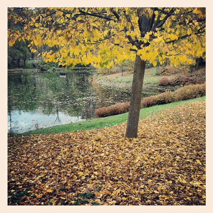 Autumn Tree - Colleen G. Drew Photography