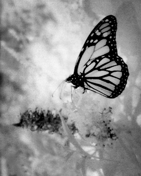 Luminous Wings - Colleen G. Drew Photography
