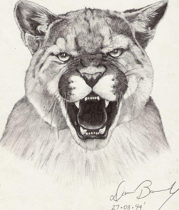 Cougar - Mountain Lion - Dan Bandy
