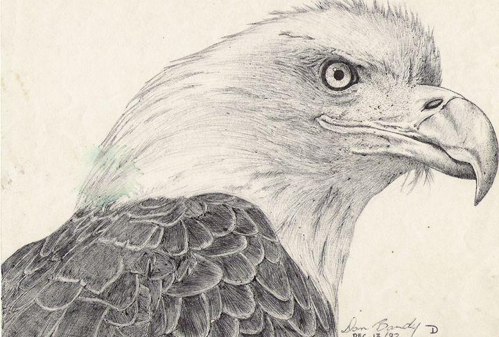 Bald Eagle - Dan Bandy