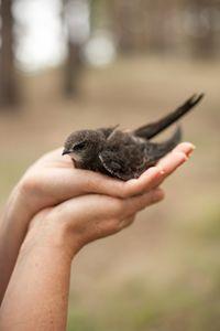 The bird - Anton Popov