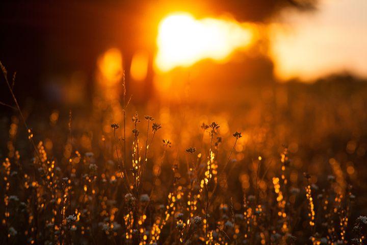 Sunset light - Anton Popov