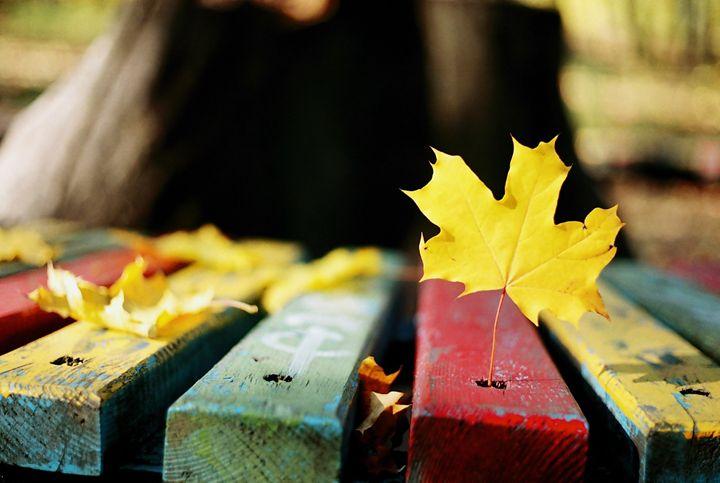 Maple Leaf - Anton Popov