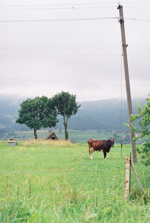 Rural life - Anton Popov