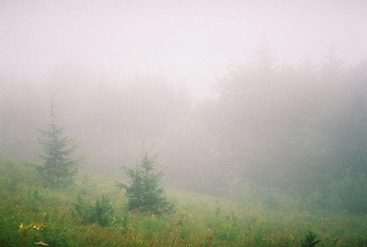 Spruce in the mist - Anton Popov