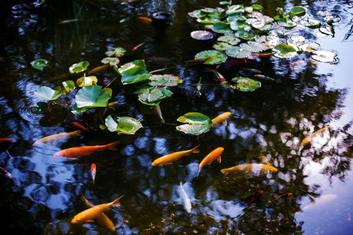 Fish in the pond - Anton Popov