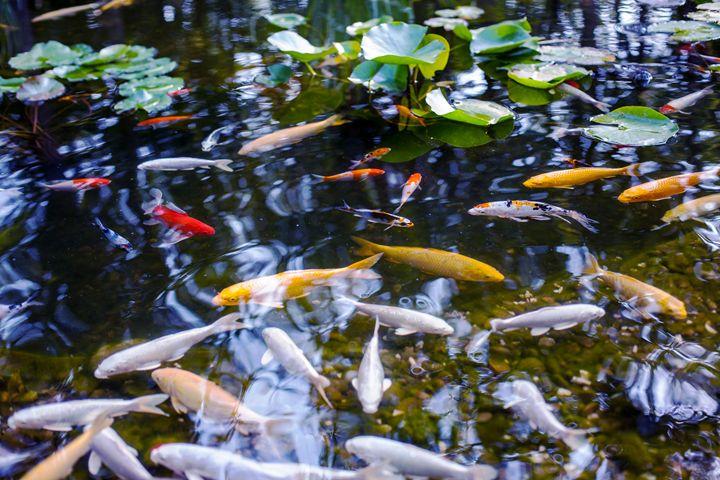 Fish in the pond 2 - Anton Popov