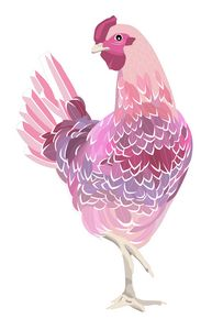 The Chicken is Pink