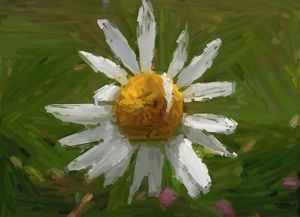 Forlorn Flower