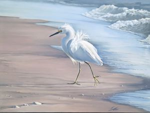Snowy Egret - Edward Coster