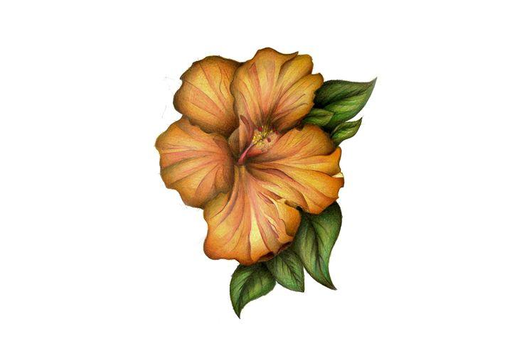 Hibiscus - John Froicu
