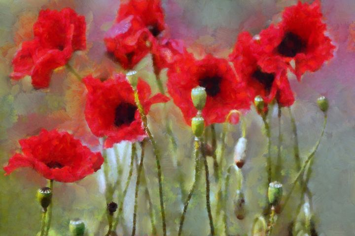 Poppies - Cathleen Cawood