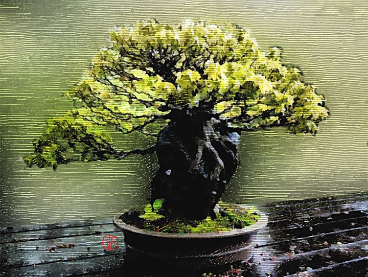 Bonsai Woodcut - Cathleen Cawood