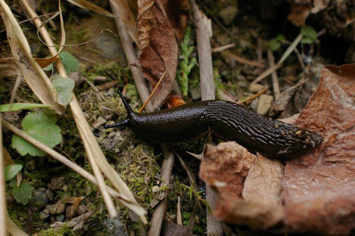 Slug on the move - tntpadrone