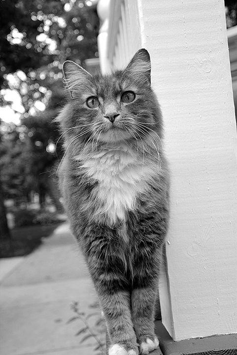 Pretty Kitty - Scott McKone