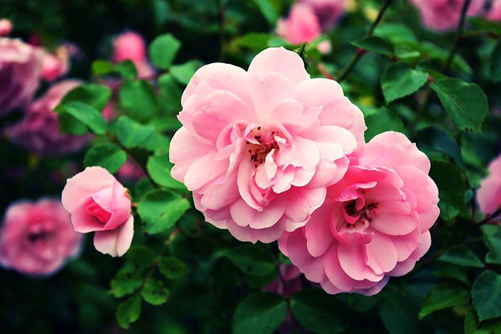Flowers #3 - Scott McKone