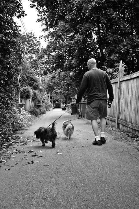 Man walking dogs - Scott McKone