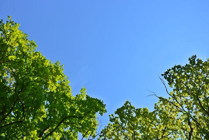 Green trees, blue sky - Scott McKone