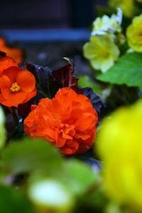 Flowers #2 - Scott McKone
