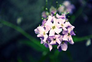 Flowers #1 - Scott McKone