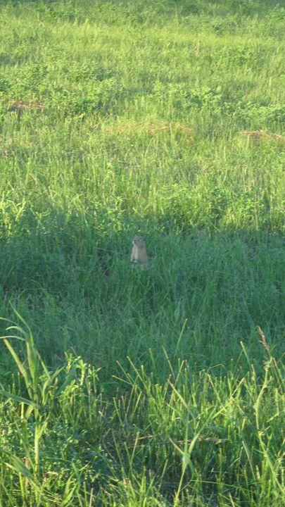 Prairie friend - Mint Pics