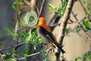 Bird Watching - Harmonic Imagery