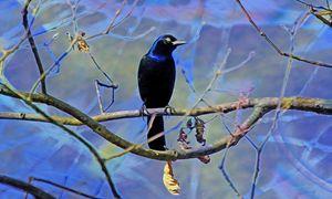 Blue Velvet - Harmonic Imagery