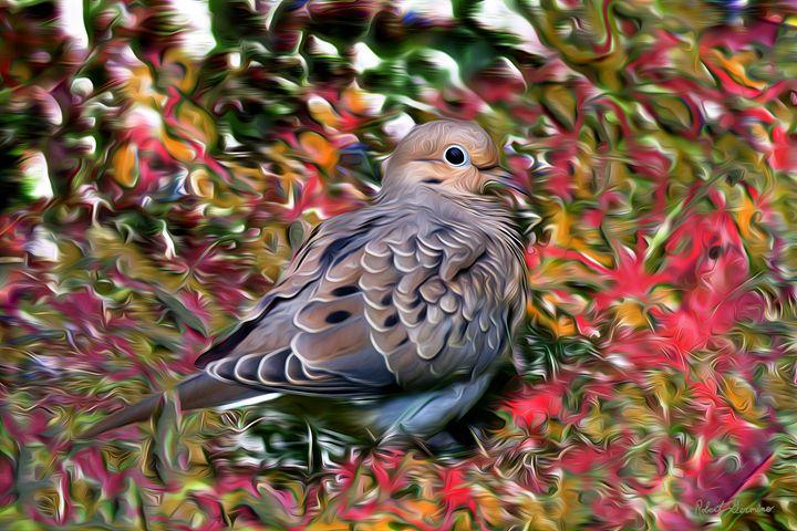 Hidden Dove - Harmonic Imagery