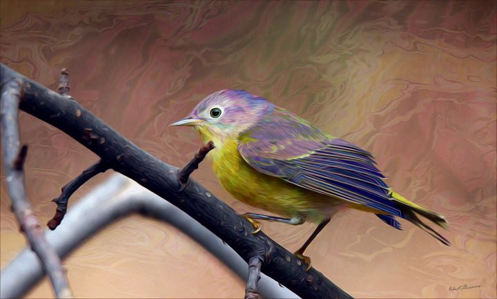 Stormy Warbler - Harmonic Imagery