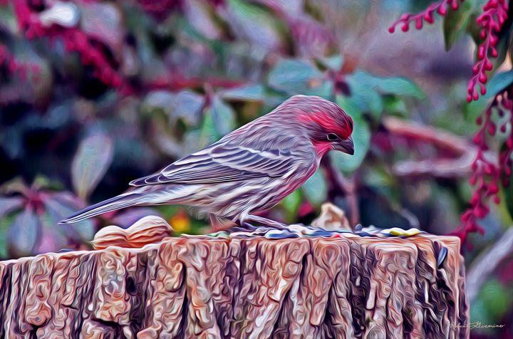 Finch's Choice - Harmonic Imagery