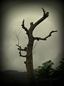 Mysterious Tree at Midday