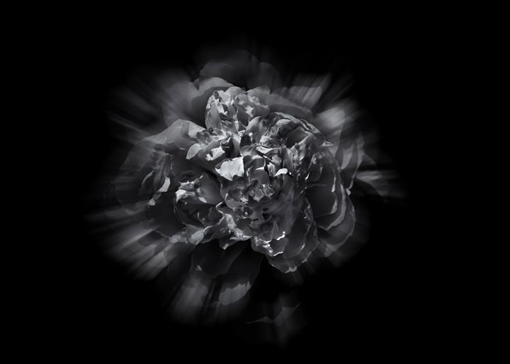 Black And White Flowers 19 Flow - The Learning Curve Photography