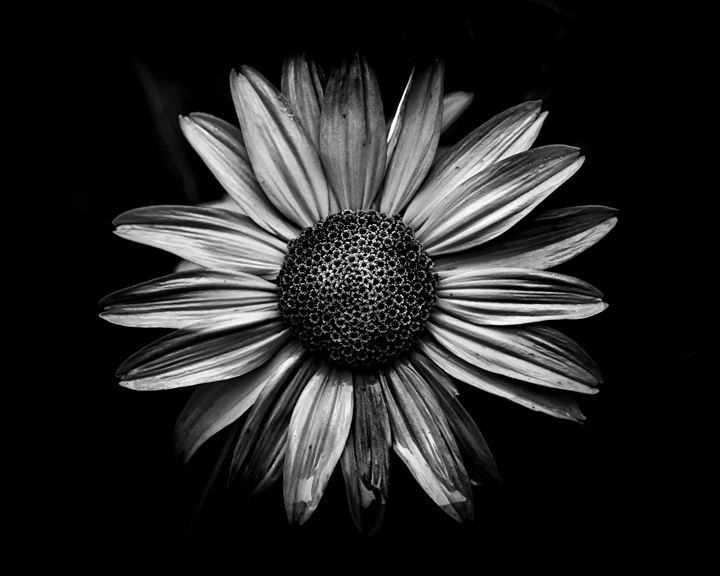 Black And White Flowers 18 - The Learning Curve Photography