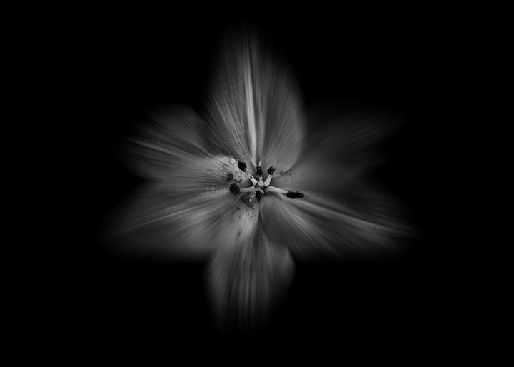 Black And White Flowers 28 Flow - The Learning Curve Photography